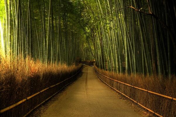 bambukovij-les-sagano-v-yaponii-01