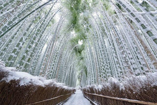 Бамбуковый лес Сагано (Киото, Япония)