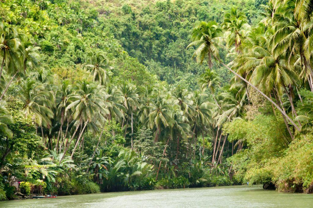 флора Амазонки
