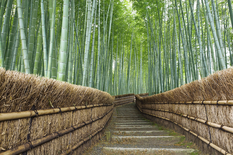 bambukovij-les-sagano-v-yaponii