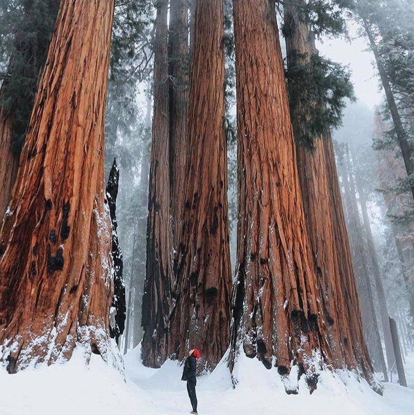 Национальный парк «Секвойя», США.