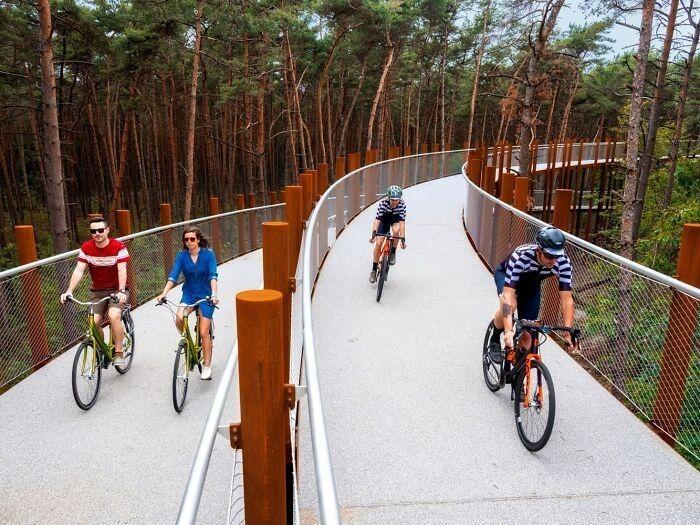 ольцевую велосипедную дорожку над лесом в Босланде